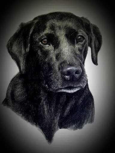 BEST PET CHARCOAL DRAWING FROM PHOTOS