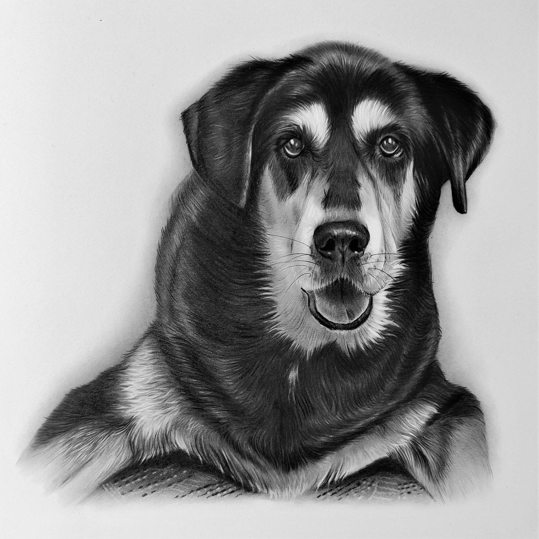 Sketch of Dog sitting